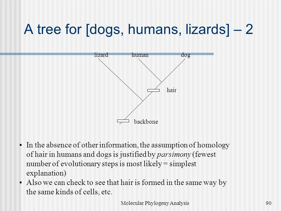 A tree for [dogs, humans, lizards] – 2
